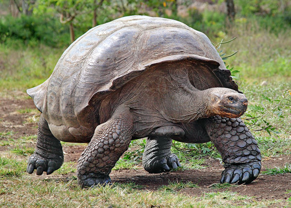Ancient Animals - Jonathan tortoise mind blowing 182 years old
