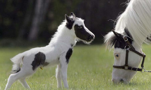 Dawww! Tiny horse! What were we talking about?