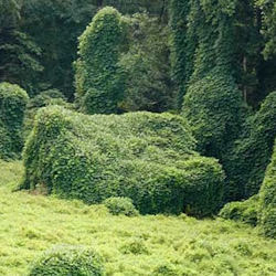 That's kudzu... It ate a HOUSE.